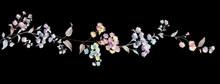 Colorful Little Chrysanthemum Flower Illustration
