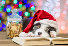 Closeup Australian Shepherd Puppy In Red Santa Hat And Eyeglasses Sleeping On Open Book With Christmas Tree On Background