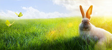 Happy Easter – Easter Bunny ...