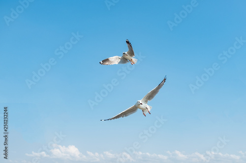 Photo  Flock of seagull flying over the sea in Thailand