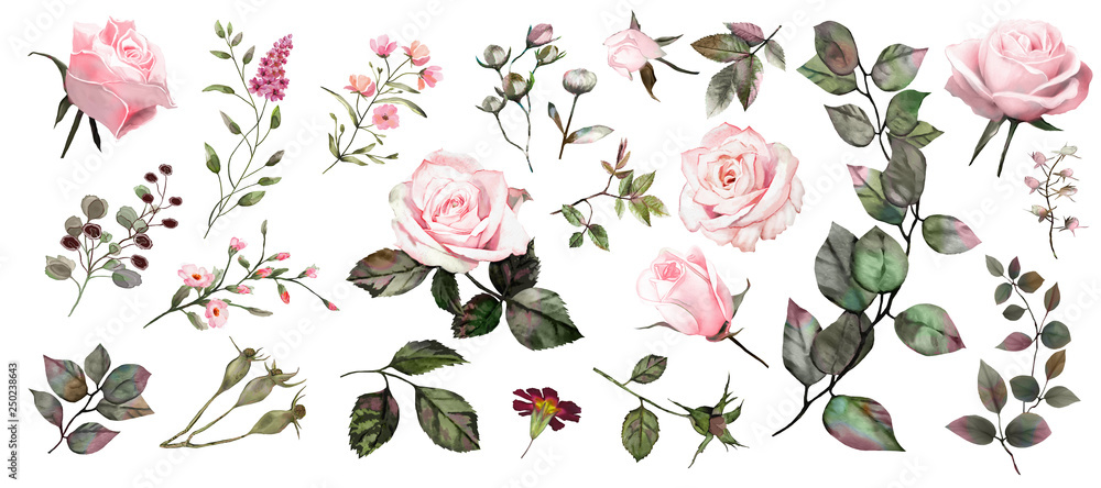 Fototapety, obrazy: Watercolor botanical collection. Pink roses. Herbs, leaves, flowers.