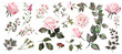 Watercolor botanical collection. Pink roses. Herbs, leaves, flowers.