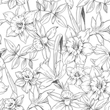 Seamless Pattern With Daffodils Flowers. Vector