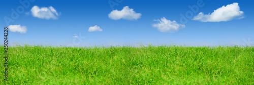 fototapeta na szkło Fresh spring green grass, Panorama