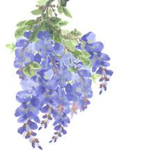 Branch Of Purple Wisteria Flowers