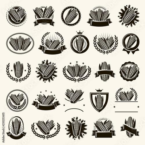 Obraz na płótnie Corn label and element set. Collection icon corn. Vector
