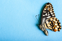 Beautiful Tropical Butterfly On Color Background