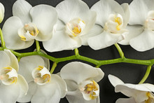 Beautiful Orchid Flowers On Dark Background