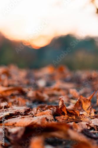 Obraz na plátně  Autumn leafs