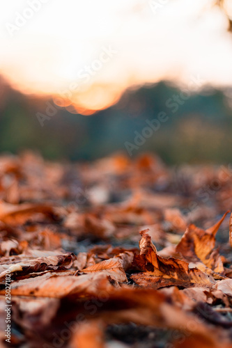 Autumn leafs Fototapet