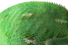 Texture Of Chameleon Skin, Closeup