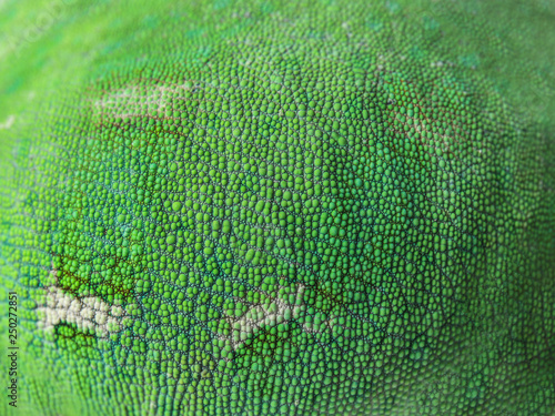 Tuinposter Kameleon Texture of chameleon skin, closeup