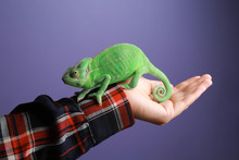 Woman Holding Cute Green Chameleon Against Color Background