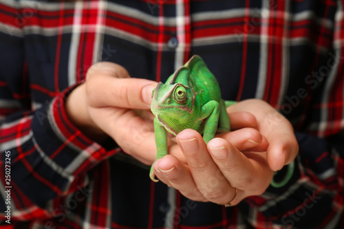Fotografia Woman holding cute green chameleon, closeup