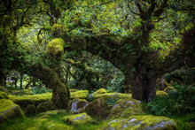 Wistmans Wood Dartmoor Devon E...