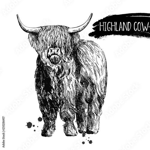 Fototapeta Hand drawn sketch style highland cattle isolated on white background. Vector illustration. obraz