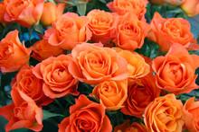 Bouquet Of Orange Roses.  Light Orange Roses For Flower Textures