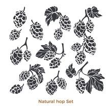Vector Nature Set Of Hop. Natural Beverage. Art Shape Collection