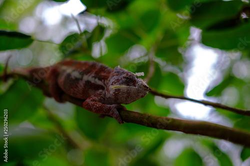 Foto auf Gartenposter Chamaleon Zoo