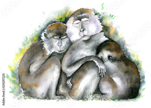 Photo  Three brown monkies sitting together with closed eyes