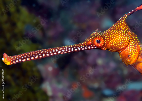 Photo Stands Coral reefs Colorful seadragon head