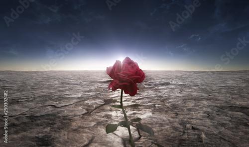 Foto Desert flower