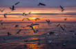 sunset on the sea with seagulls