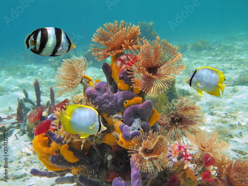 Colorful marine life underwater in the Caribbean sea with worms, sponges and tropical fish #250322029