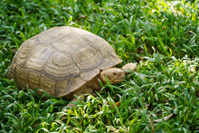 Tortoise Turtle Animal With Shell On Green Grass