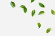 Green leaves mockup