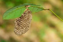 Image Of Honeycomb Empty Under...