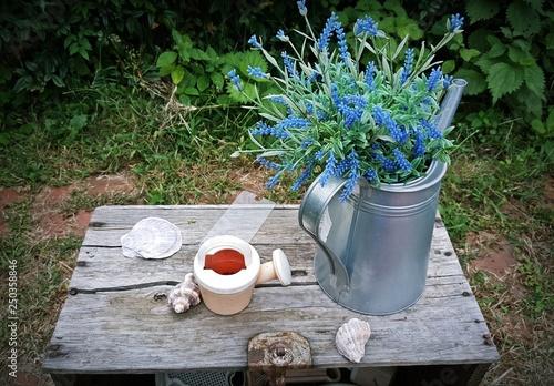 Fototapeta 정원, 꽃 화분garden, flower obraz