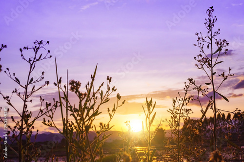 Printed kitchen splashbacks Purple sunset over the lake, The beautiful natural landscape at sunset. The meadow is densely lit by the sunset.