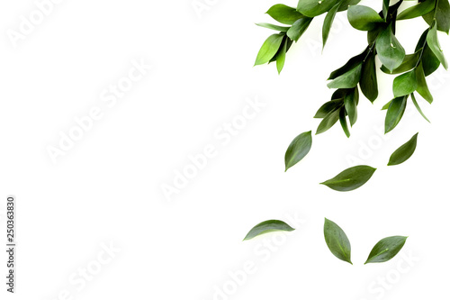 Spring green plants, sprigs, leaves border on white background top view space for text border - 250363830
