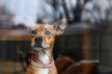 Dog Behind Glass Door