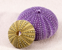 Sea Shells Of Sea Urchin ( Violet And Green) Lying On The Sand, Close Up