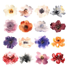 Watercolor Flowers Hand Drawn Colorful Beautiful Floral Set With Blossom Plant For Cards Prints And Invitation.