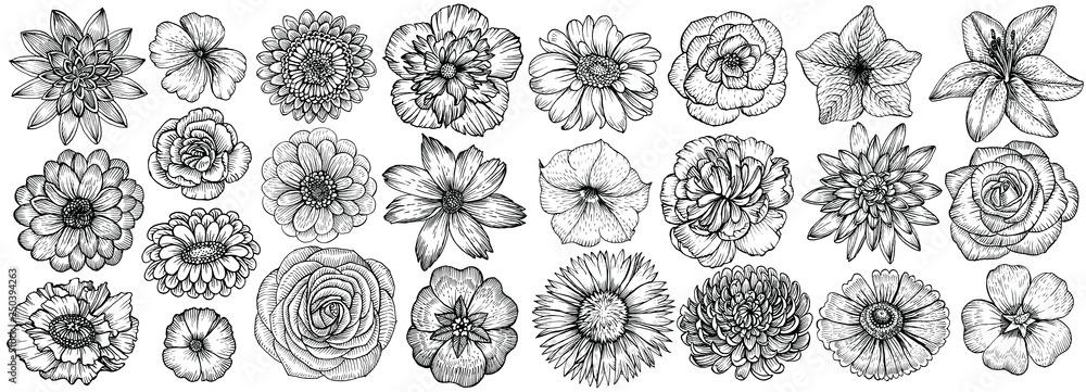 Fototapeta Hand drawn flowers, vector illustration. Floral vintage sketch.