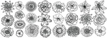 Hand Drawn Flowers, Vector Illustration. Floral Vintage Sketch.