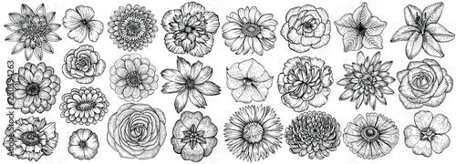 Photo Hand drawn flowers, vector illustration. Floral vintage sketch.
