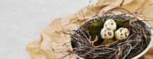 Quail Eggs On Green Natural Moss In A Nest Of Branches Made In An Old Iron Sieve. Eco-friendly Retro Concept Postcard For Easter.