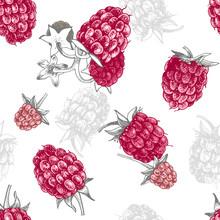 Seamless Pattern With Hand Drawn Raspberries