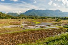 Landscape Of Rice Field In Sou...