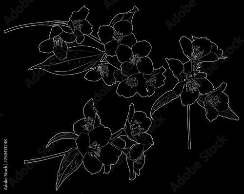 three white jasmin spring branch outlines Canvas Print