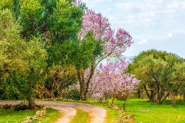 Fototapetaflowered garden in spring