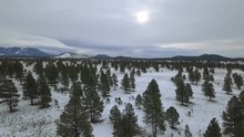 Aerial Of A Pine Forest In Winter With Distant Mountains