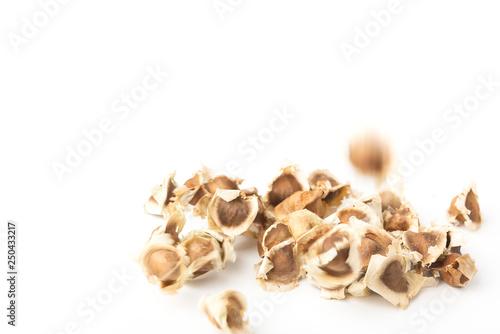Moringa Oleifera seed dried on isolated white background