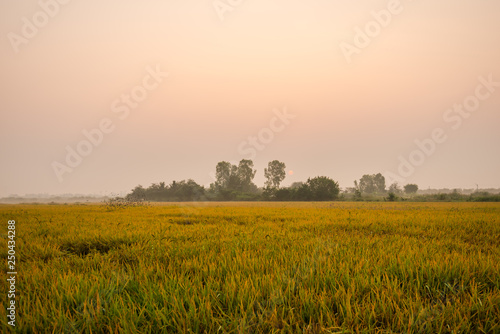 Foto auf AluDibond Beige Thailand is an agricultural country.18