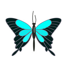 Papilio Ulysses Butterfly Isolated Vector. Tropical Butterfly, Hobby Collection, Lepidoptera. Insects Concept. Vector Can Be Used For Topics Like Nature, Biology, Fauna