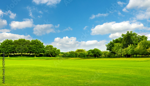 Obraz Green field, tree and blue sky.Great as a background,web banner - fototapety do salonu